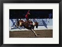 Framed Saddle Bronc Rider
