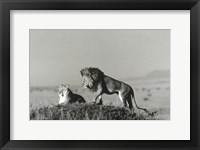 Framed Lion And Lioness On A Hill