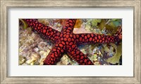 Framed Sea Star