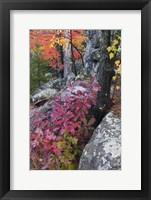 Framed Autumn Color Foliage And Boulders Along Saint Louis River, Minnesota.