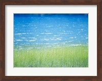 Framed Grass In Water