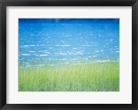 Framed Grass In Water