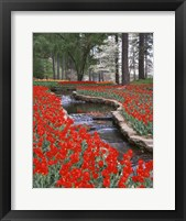 Framed Red Tulips And Brook In Hodges Gardens, Louisiana