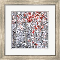 Framed Snow Covered Aspen Trees