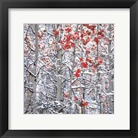 Framed Snow Covered Aspen Trees