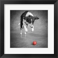 Framed Portrait Of A Border Collie Mix Dog