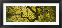Framed View Of Tree Branches, Portland Japanese Garden