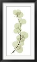 Framed Eucalyptus