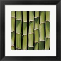 Framed Bamboo Lengths