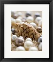 Framed Sea Jewels IV