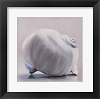 Framed Moon Snail