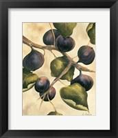 Framed Italian Harvest - Figs