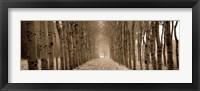 Framed Shimmering Forest