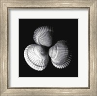 Framed Shell Collection I