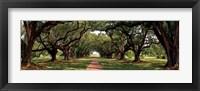 Framed Enchanted Oaks