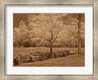 Framed Smokies Fence