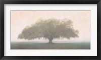 Framed Oak in the Fog