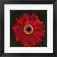 Framed Midnight Gerbera III