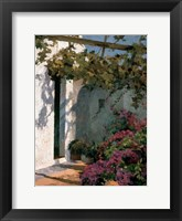 Framed Bougainvillea and Vine