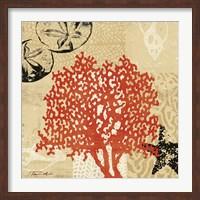 Framed Coral Impressions IV