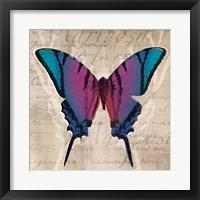 Framed Butterflies IV