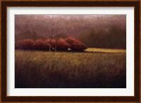 Framed Young Maples