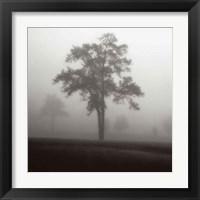 Framed Fog Tree Study I