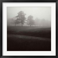 Framed Fog Tree Study II