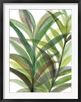 Framed Tropical Greens II