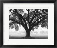 Framed Silhouette Oak