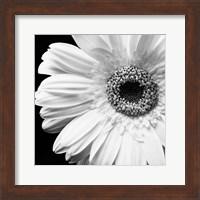 Framed Sunburst I