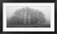 Framed Gathering Trees