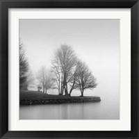 Framed Fog and Trees at Dusk