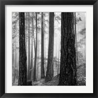 Framed Photography