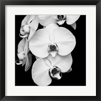 Framed Orchid Portrait I