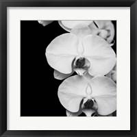 Framed Orchid Portrait II