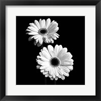 Framed Gerbera Portrait I
