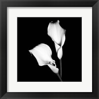 Framed Calla Portrait I