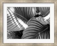 Framed Leaf Abstract V
