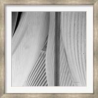 Framed Leaf Abstract IV