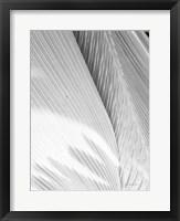 Framed Leaf Abstract I