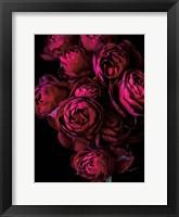 Framed Cabbage Roses