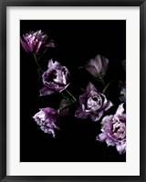Framed Purple Fringed Tulips III