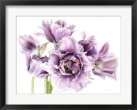 Framed Purple Fringed Tulips I