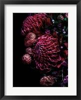 Framed Waratah Bouquet