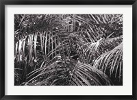 Framed Tropical Fronds BW