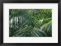 Framed Tropical Fronds