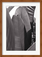 Framed Palm Detail IV BW