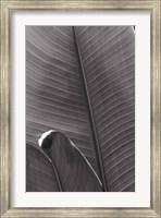 Framed Palm Detail III BW