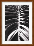 Framed Palm Detail II BW